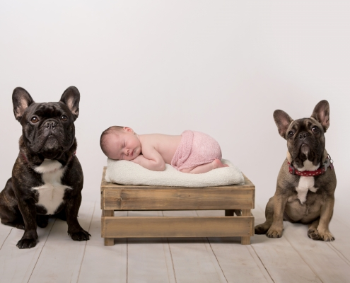 Photoshop help baby with 2 pet dogs